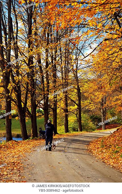 An adult man walks his dog along a country road in autumn in New England