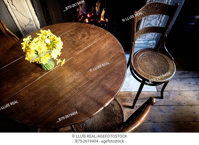 Room of a house, with an old table and a bouquet of yellow daffodils on it, Thonet chairs, a lighted fire place in the background and an old wooden floor