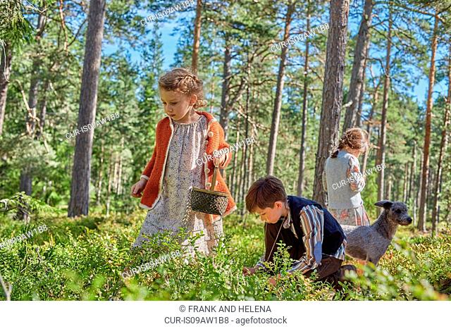 Girls and boy dressed in retro clothing picking berries in forest