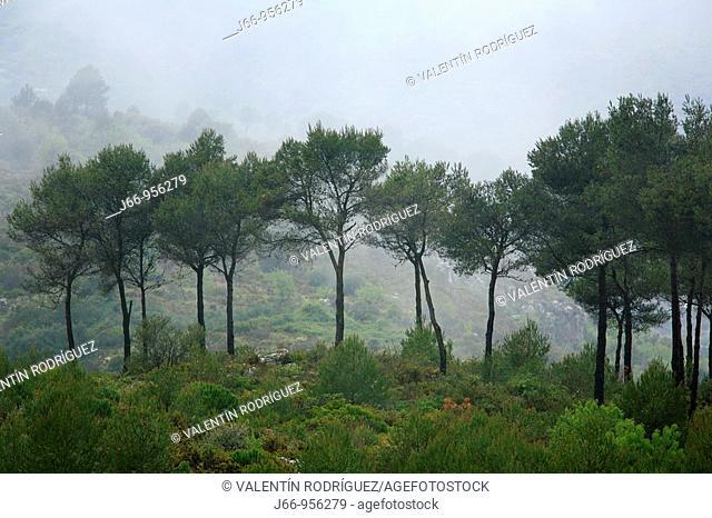 Paisaje en Vall de Ebo