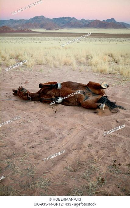 Desert homestead in Namibia with horses and riders