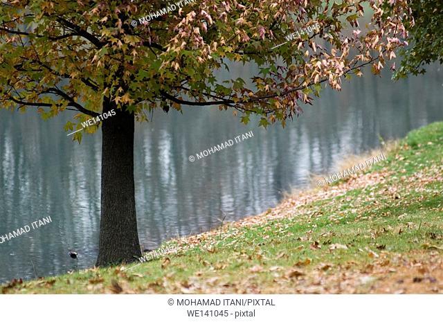 Tree in Spanish Lake St. Louis Missouri USA