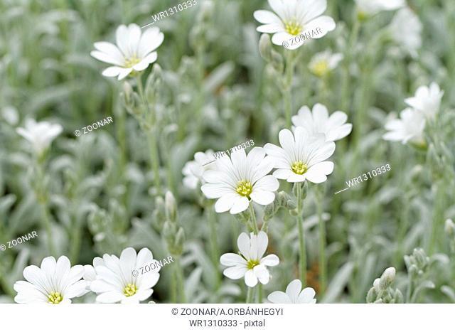 White rock flower garden edging