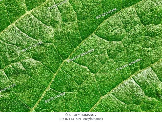 Leaf of plant surface background
