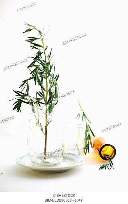 Rosemary sprigs in jars