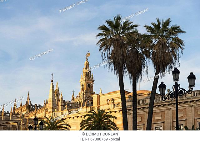 Spain, Andalusia, Seville, Giralda Tower and cathedral with palm trees in foreground