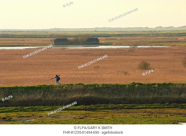 Coastal freshmarsh, reedbeds and hides, birdwatcher walking on bank, Cley Reserve, North Norfolk, England, winter