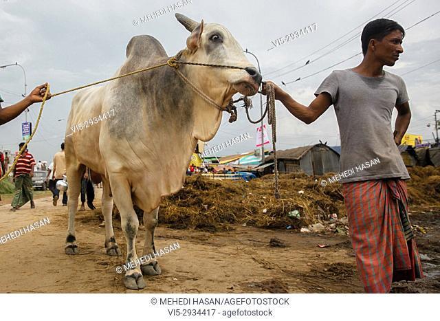 "Men lead cows at a cattle market the day before Eid-al-Adha in Dhaka, BangladeshEid al-Adha called the """"Sacrifice Feast"""""