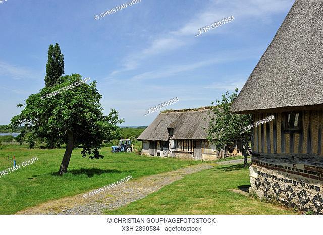thatched cottage by the ''La Grand-Mare'' pond, Marais Vernier, Boucles de la Seine normande Regional Nature Park, Eure department, Normandy region, France