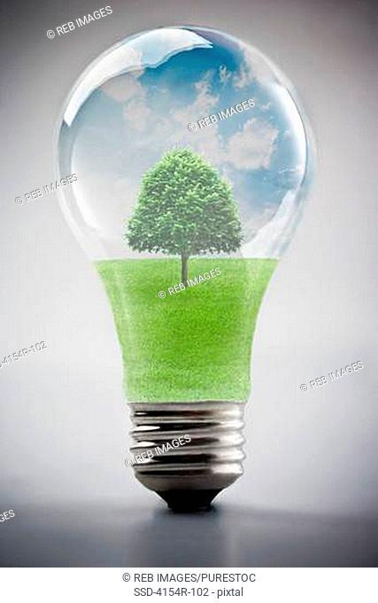 Tree growing inside light bulb