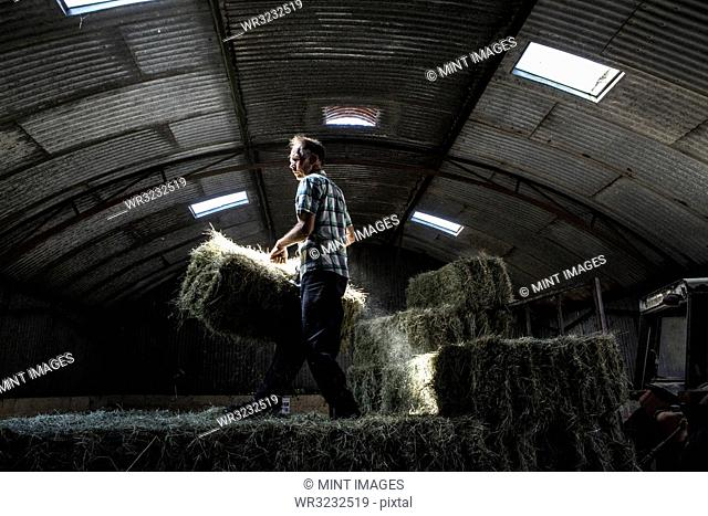 Farmer stacking hay bales in a barn
