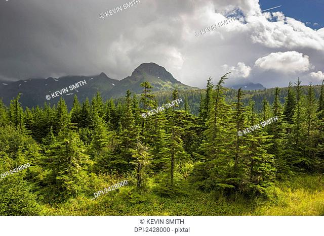 Spruce tree forest with mountain peak in background, Chugach National Forest, Prince William Sound; Cordova, Alaska, United States of America