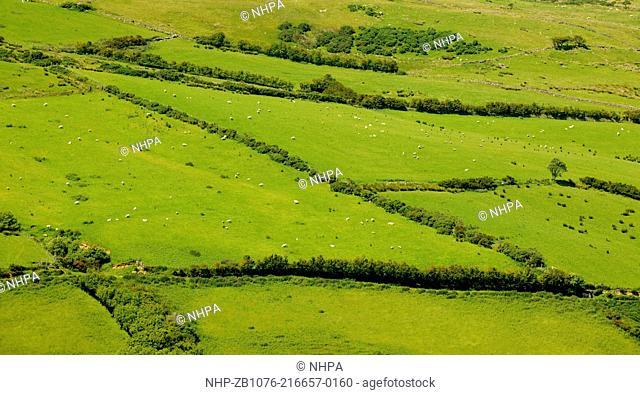 Field near Torr Head, County Antrim, Northern Ireland