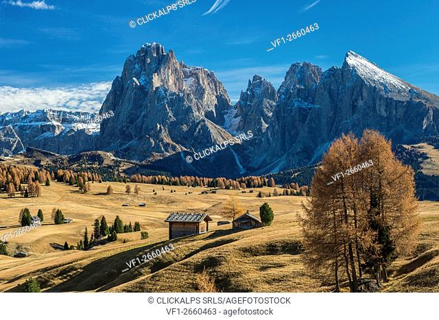 Alpe di Siusi/Seiser Alm, Dolomites, South Tyrol, Italy. Autumn on the Alpe di Siusi/Seiser Alm with the peaks of Sassolungo/Langkofel and...
