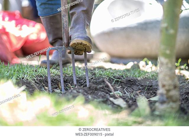 Close-up of man using fork in garden