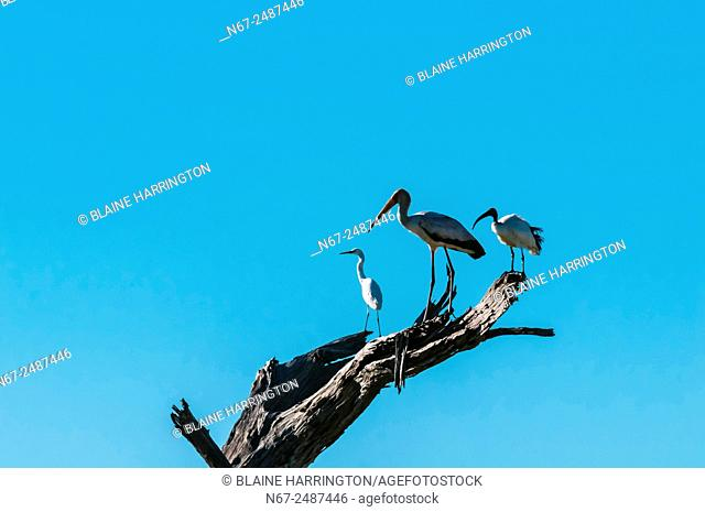Birds, Kwando Concession, Linyanti Marshes, Botswana