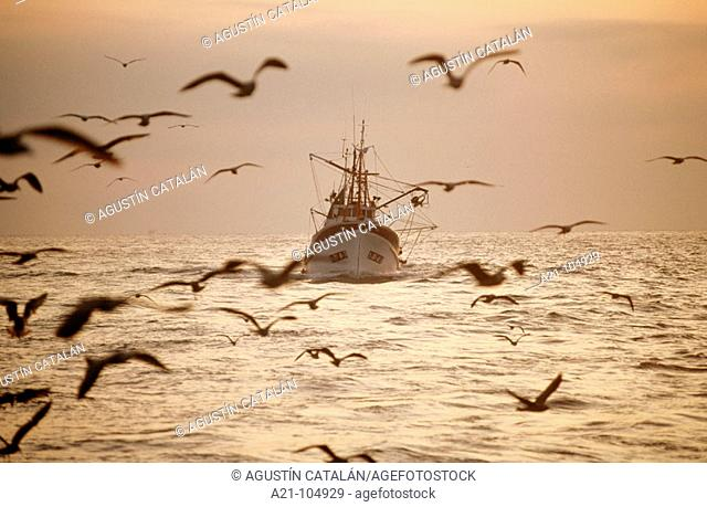 Anchovy fishing, Ondarroa, Biscay, Spain
