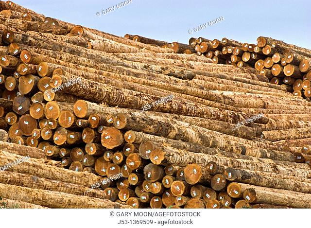 Huge pile of softwood logs at sawmill, Coos Bay Oregon