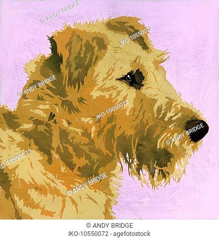 Painting of Irish Terrier dog