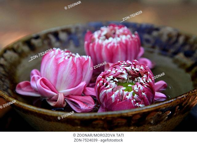 pink lotus buds in a bowl of water