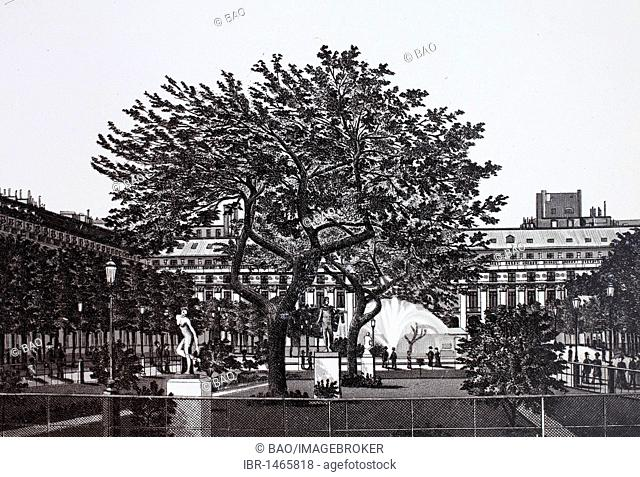 Jardin du Palais Royal, historic copper-plate etching, from around 1890, Neal's, Paris, France, Europe