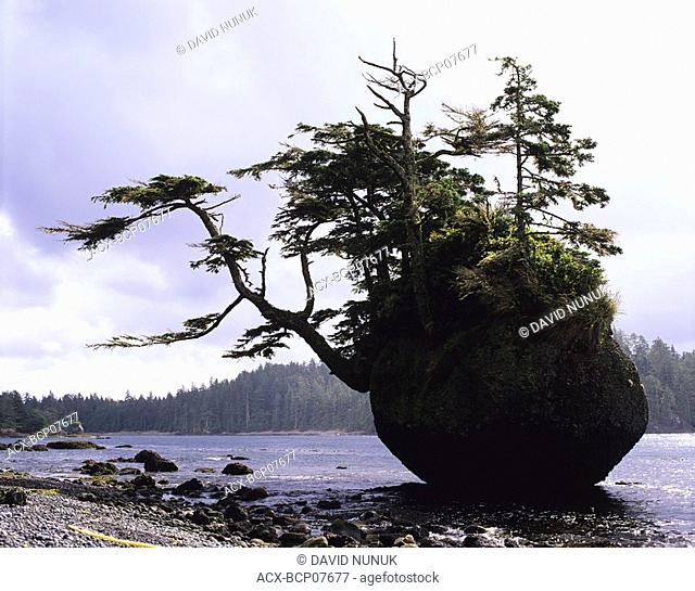 Testlatlints rock or Flower pot Rock, Langara Island, Haida Gwaii, British Columbia, Canada