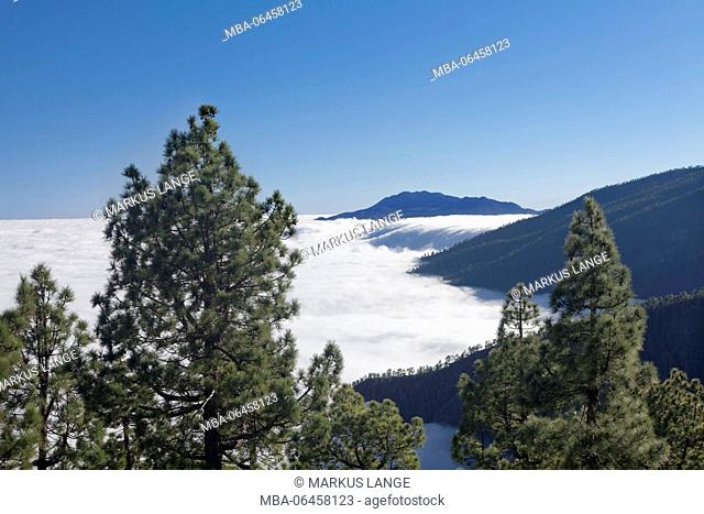 View from the Caldera de Taburiente on the cloud waterfall in the Cumbre Nueva, Parque Nacional de la Caldera de Taburiente, La Palma, Canary islands, Spain