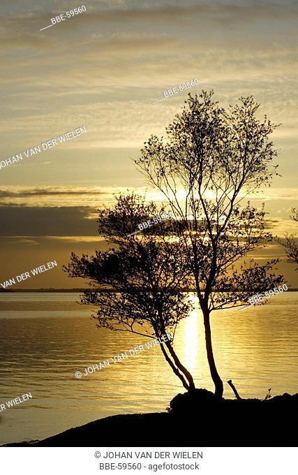 sunrise through the trees, Lough Mask, Ireland