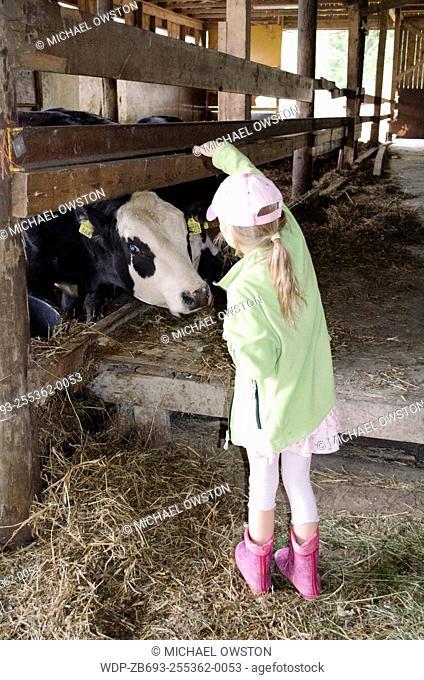 child feeding cows Sastamala Finland