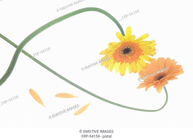 Marigold forming a heart