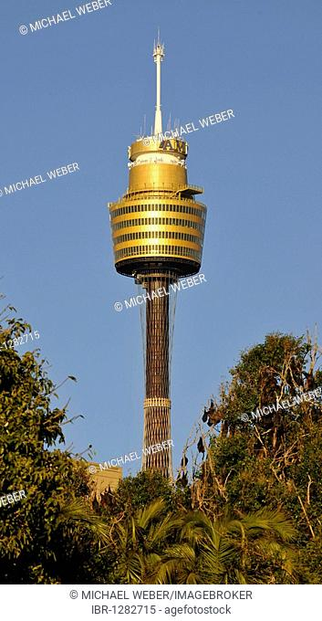Sydney Tower or Centrepoint Tower, tallest structure in Australia, Sydney, New South Wales, Australia