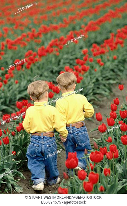 Twins aged 3 play in tulip field, back view. Mount Vernon. Washington. USA