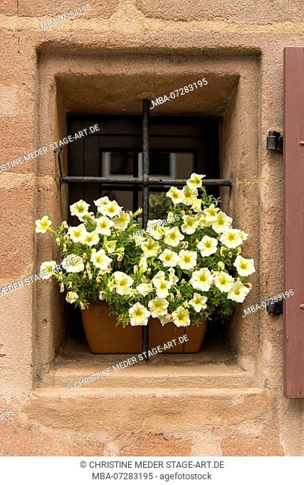 Window, flower box, petunia, Nuremberg, Franconia