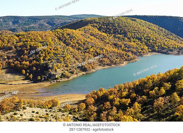 Portuguese Oaks (Quercus faginea). Quejigar de Torrecuadrada de los Valles, Tajera Reservoir, Valle del Río Tajuña, La Alcarria, Guadalajara, Spain
