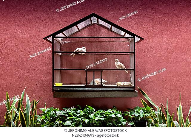 Pigeons, Museo Universitario Alejandro Rangel Hidalgo, Nogueras. Colima, Mexico