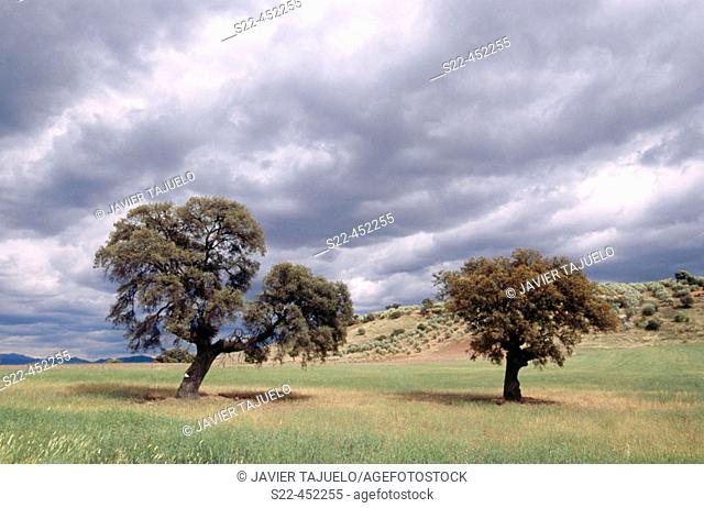 Pastures by East Sierra Morena, Jaén province. Andalusia, Spain