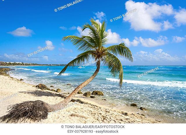 Akumal coconut palm tree beach in Riviera Maya of Mayan Mexico