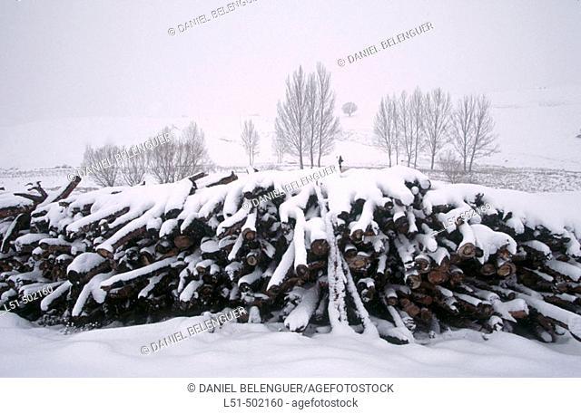 Stack of logs with snow. Bosque de Ribera. Serrania de Cuenca. Tragacete. Cuenca. Spain