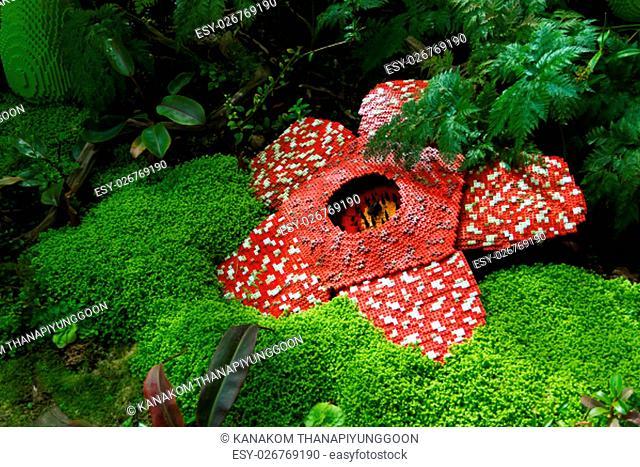 Corpse flower was made of interlocking plastic bricks toy. Scientific name is Rafflesia kerrii, Rafflesia arnoldii, Stinking corpse flower