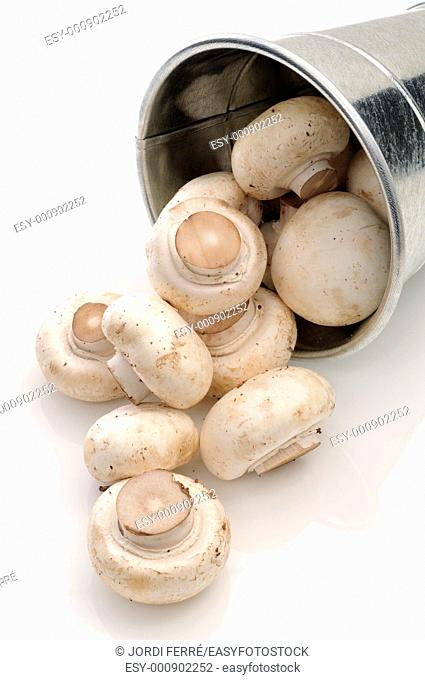 Champignons in a bucket on white background