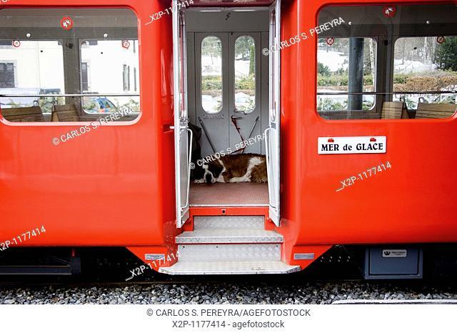 dog guardian in Chamonix, France