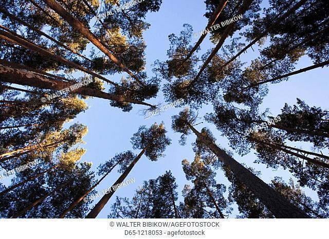 Estonia, Southwestern Estonia, Vorts Jarv lake area, Vehendi, inside the forest