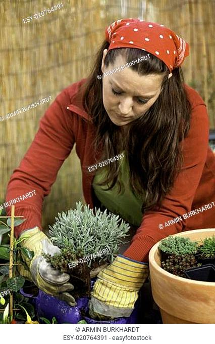 woman at gardening - lavender