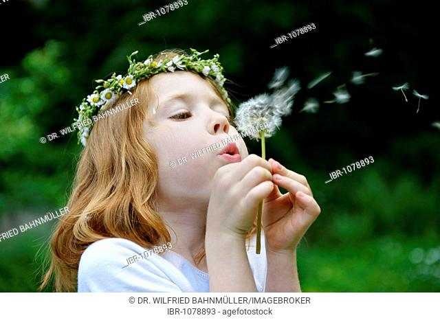 Young girl wearing a floral wreath in her hair blowing a dandelion clock