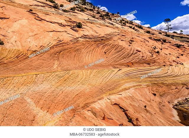 The USA, Utah, Washington county, Springdale, Zion National Park, part of town, scenery at the Zion - Mount Carmel Highway