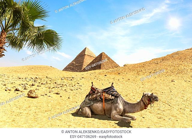 Desert scenery with the Pyramids, a camel amd palm trees, Egypt