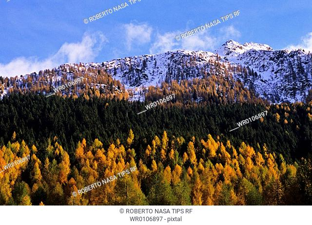Mountain range and woods in autumn