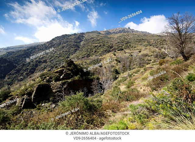 Forest Landscape. Natural Park Sierra Nevada, Granada Andalusia. Spain Europe