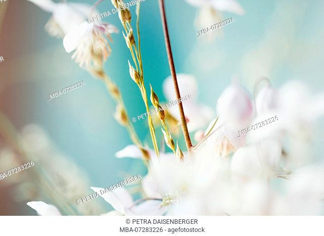 Small flowers coming out big - pastel colors, soft and romantic