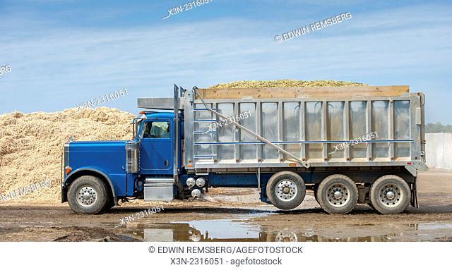 Large truck hauling silage in Ridgley, Maryland, USA